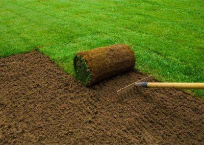 Lawn & Sod Installation